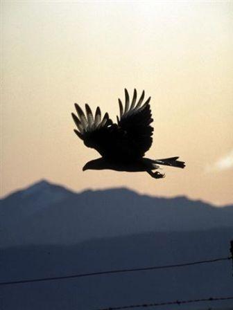 liberdade-passaro-voando